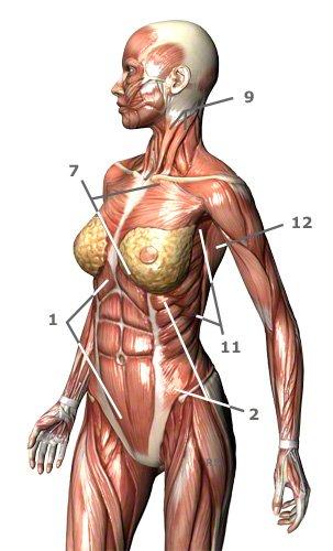 Atemhilfsmuskulatur des Menschen