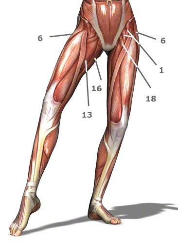 Hüftmuskulatur von vorn