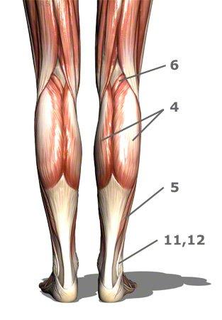 hintere Unterschenkelmuskulatur